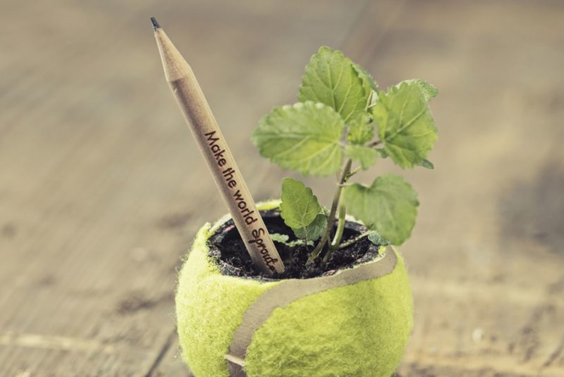 Sprout World : le crayon qui se plante