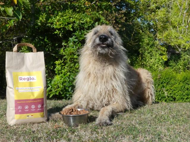 Reglo : les croquettes aux insectes bonnes pour les chiens et la planète