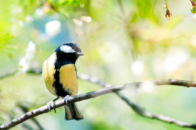Confinement : et si vous deveniez un observateur de la biodiversité ?