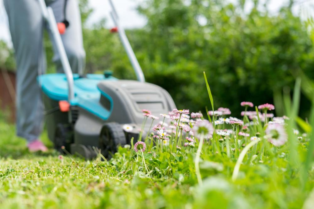 Tontes de pelouse, feuilles : que faire de ses déchets verts ?