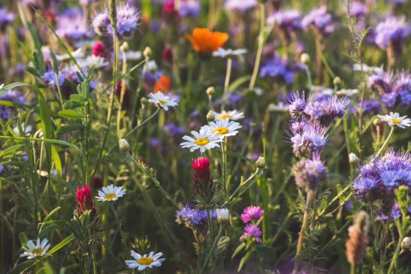 Insectes pollinisateurs : créez votre « Zone de BZZZ » pour les protéger !