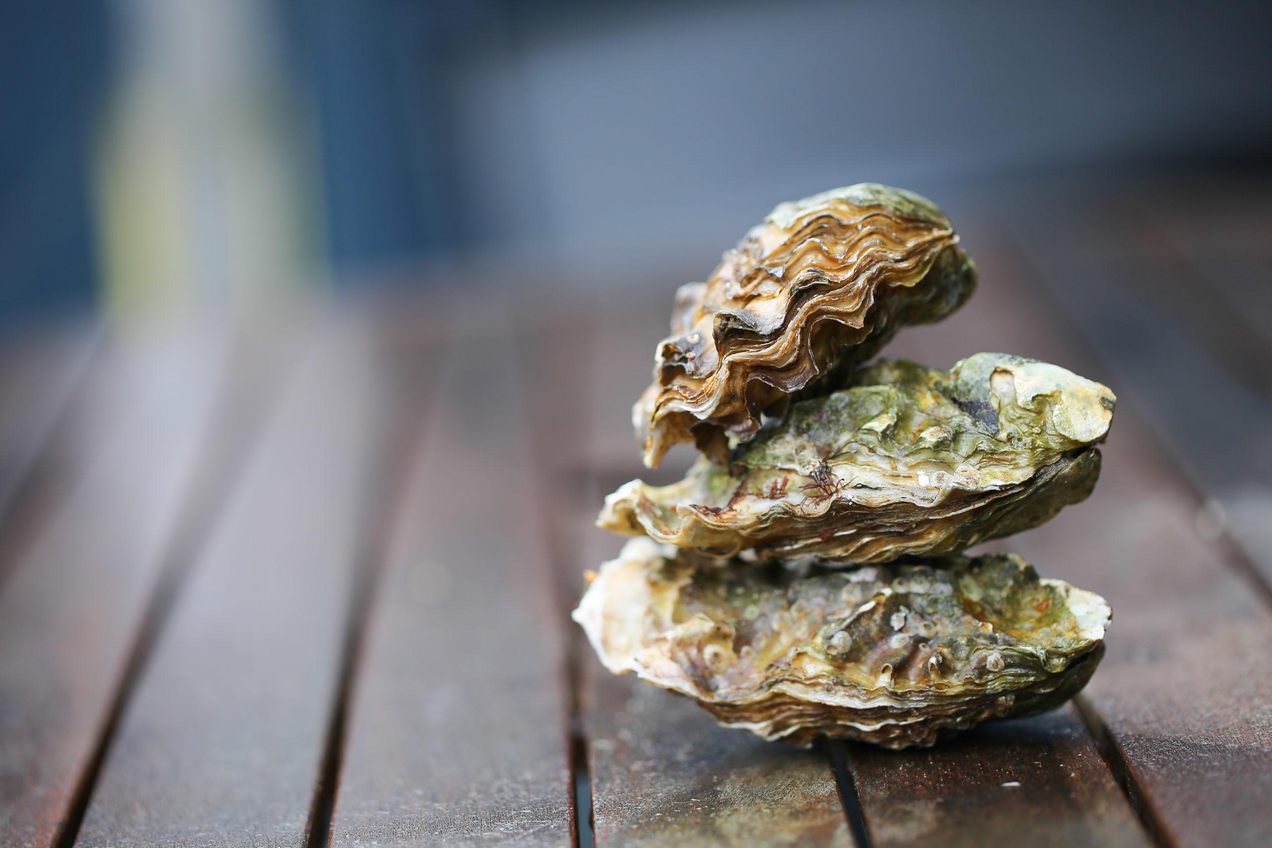 Recyclage : que faire des coquilles d'huîtres ?