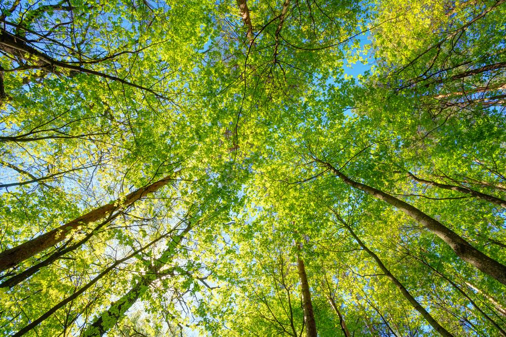 GreenBug : des box pour agir concrètement en faveur de l'environnement