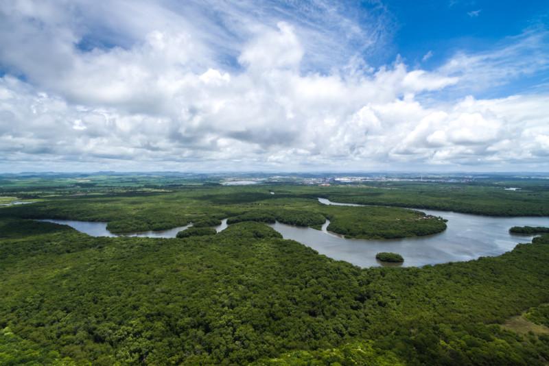 Protection de l'Amazonie : que pouvons-nous faire à notre échelle ?