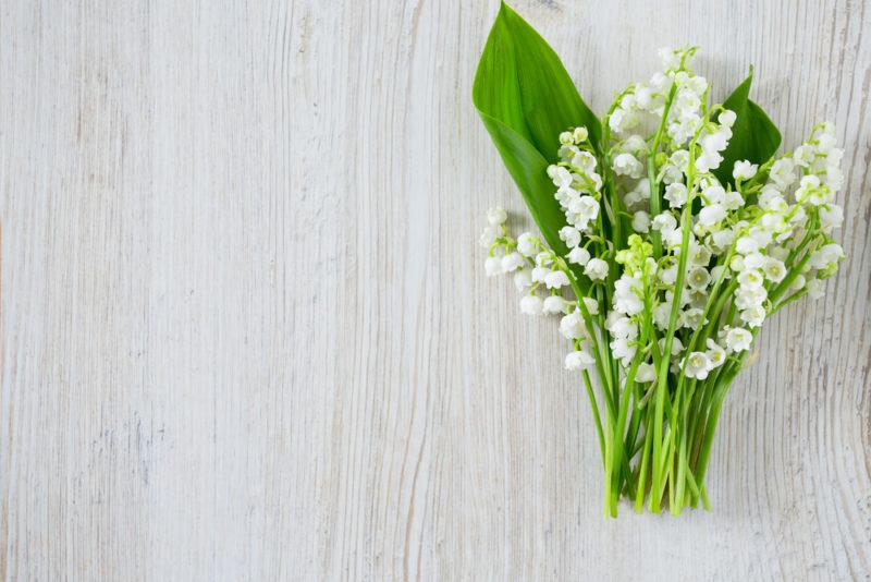 « Les Fleurs du Bien » : du muguet pour soutenir les horticulteurs et fleurir les Ehpad