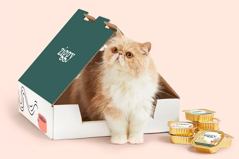 Ziggy, la nouvelle marque de pâtées pour chats engagée et 100% transparente
